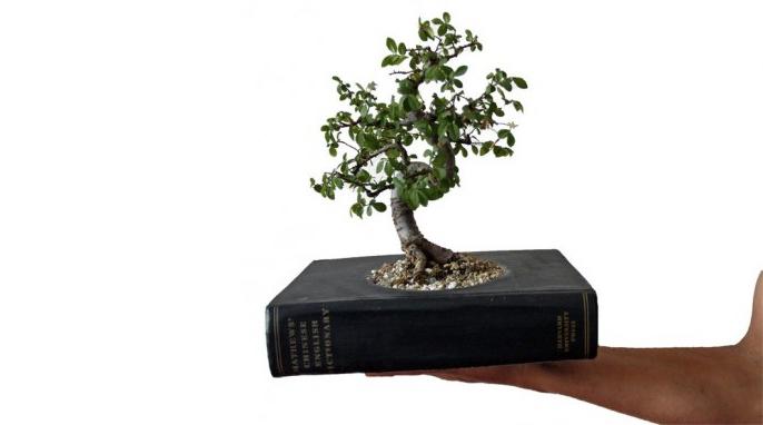 Pretvorite vašu staru knjigu u vazu za biljke